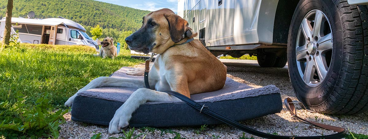 camping_slider3